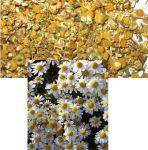 Heřmánek květ 1000g